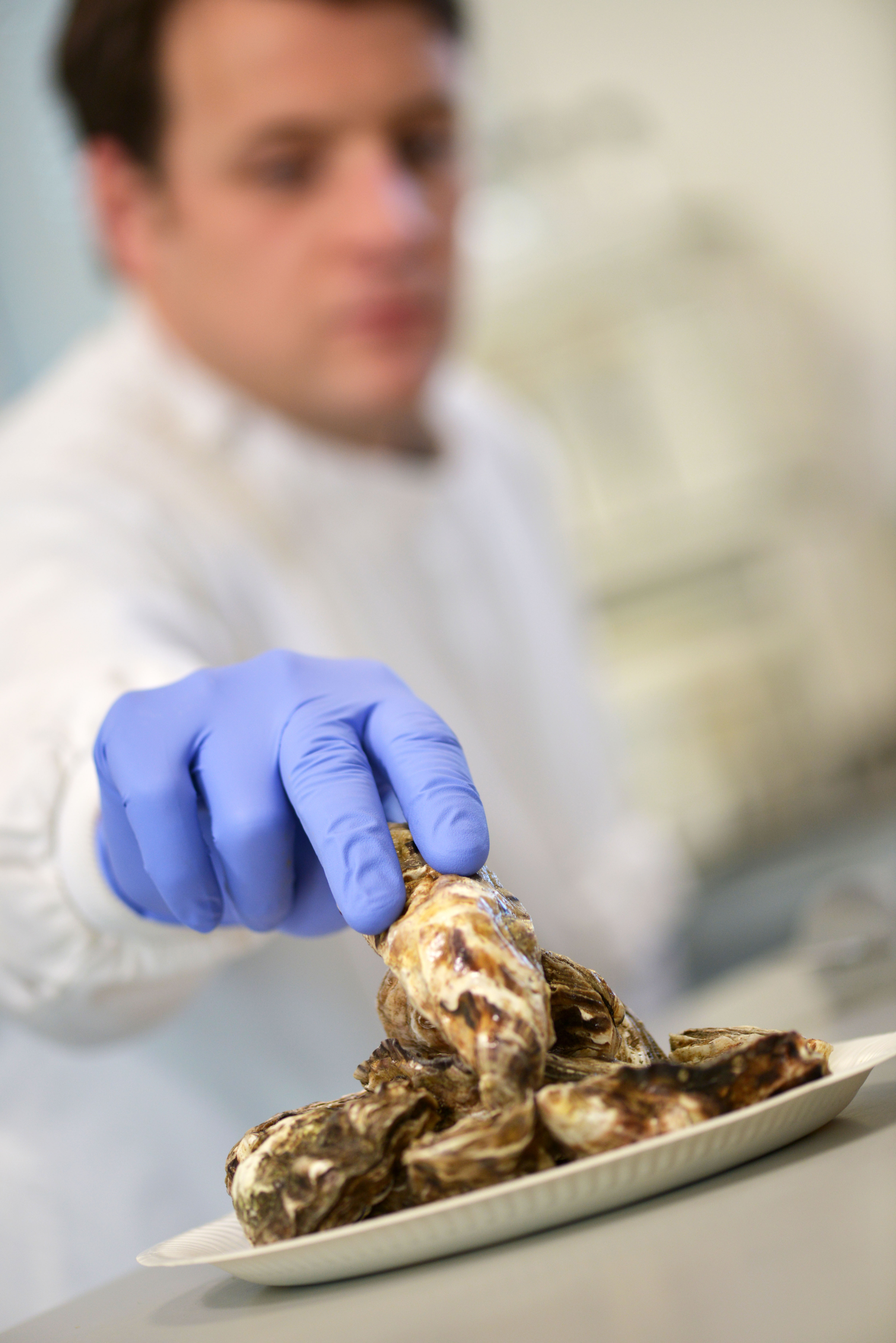 CISB Oyster sample preparation