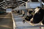 Feed intake monitoring system which allows individual cow intakes to be recorded