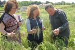 AFBI's Lisa Black (pictured far left) with Aveen McMullan and a grower in a field of winter barley with heavy brome grass infestation