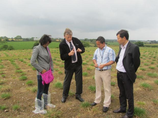 F-R, Dr Yunwei Zhang (CAU), Dr Trevor Gilliland (AFBI), Dr Tianhai Yan (AFBI) and Prof Fuyu Yang (CAU) discussing grass production at AFBI Crossnacreevy