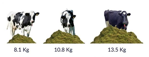 Figure 1. Amount of grass offered to a 450kg heifer each day at differing pasture allowances