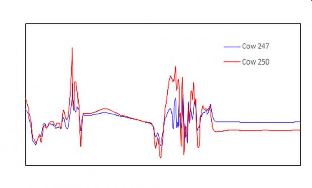 Figure 1. Typical MIR spectra for milk samples from two dairy cows