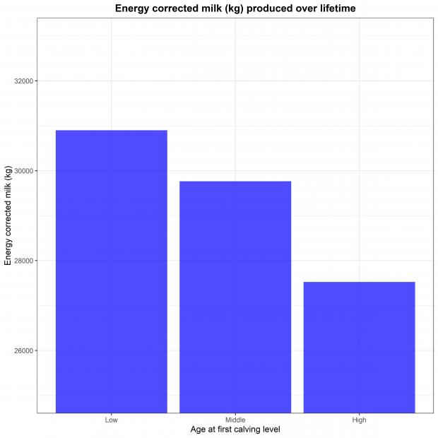 Bar plot of energy corrected milk produced during cattle lifetime over the three age at first calving levels in the UK Holstein cows used in this study.