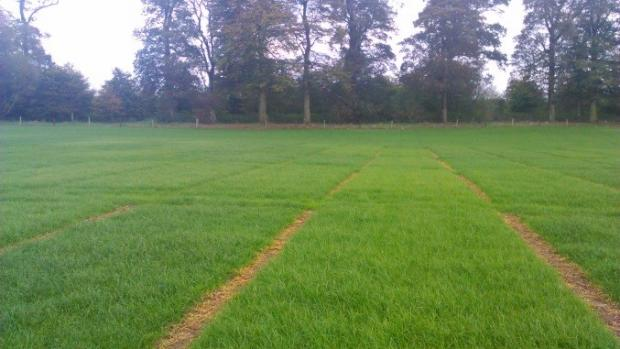 Large animal grazing plots used to assess variety grazing efficiency