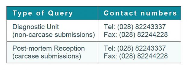 VSD Omagh contact numbers