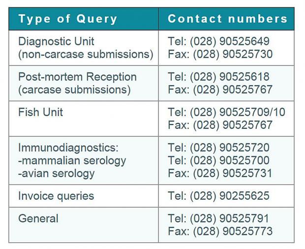 VSD Stormont contact numbers
