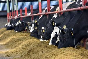 Winter feeding – a key focus of the AFBI Dairy Open Day on 6th June