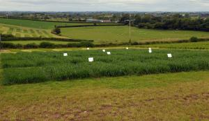 Use of AFBI grass varieties continues to increase annually