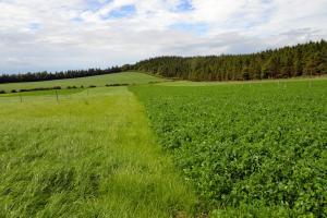Grass and grass clover swards growing at AFBI Hillsborough