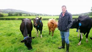 David Hunter with his 80 cow, spring calving herd, near Newtownstewart.