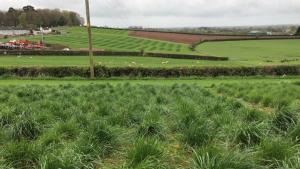 Forage grass breeding plots at AFBI, Loughgall.