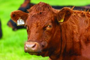 """""""Healthy Cattle, Healthy Profits"""" is the title of this years conference"""