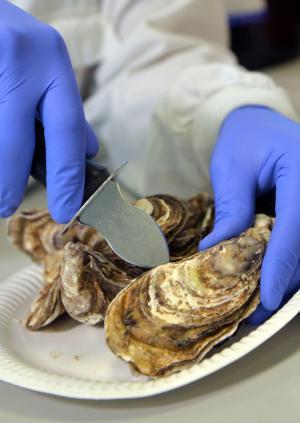 shellfish testing